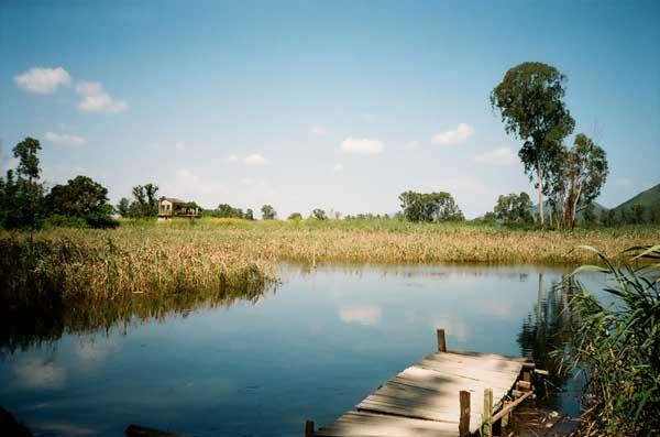 静水土池塘养鱼高产的原理与技术