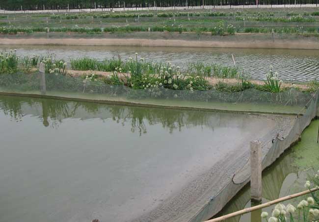 泥鳅养殖池的水质管理方法