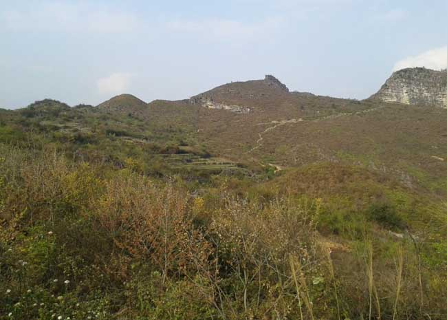 贵州长顺县万亩亩荒山寻求茶油种植合作伙伴