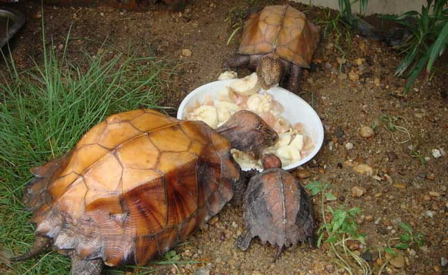 乌龟的生活习性及特点