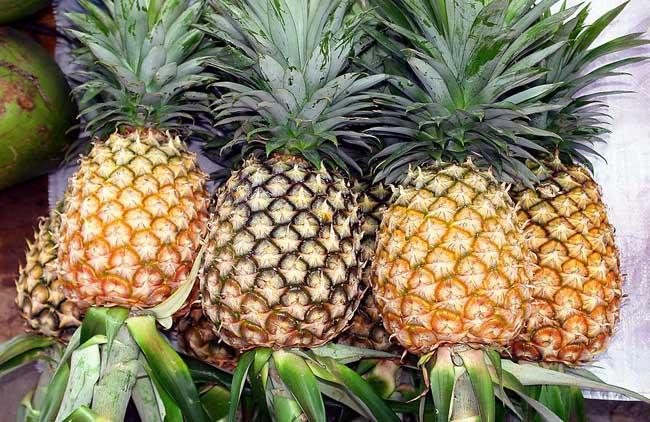 菠萝长在哪里