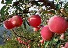 春季吃什么水果好?