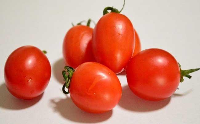 樱桃小番茄种植技术