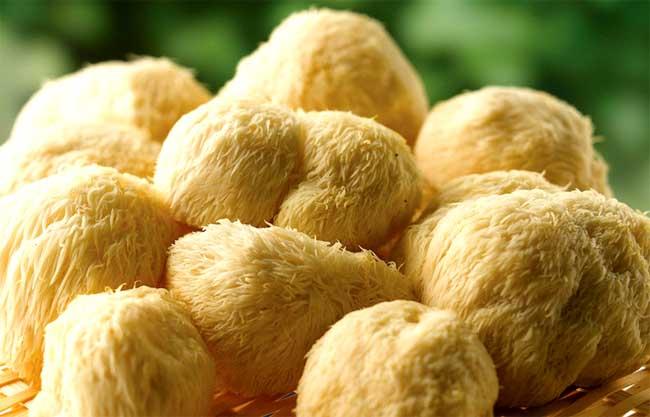 猴头菇的功效与作用