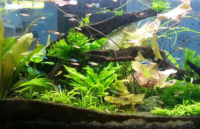 水草鱼缸造景