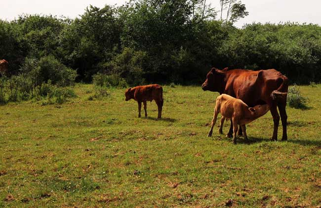 牛养殖场卫生管理