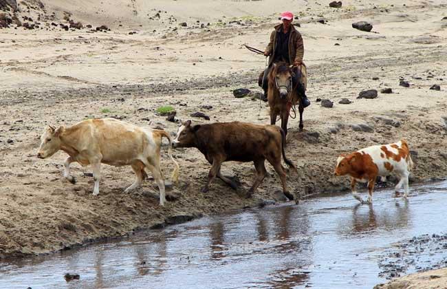 肉牛高效养殖管理技术