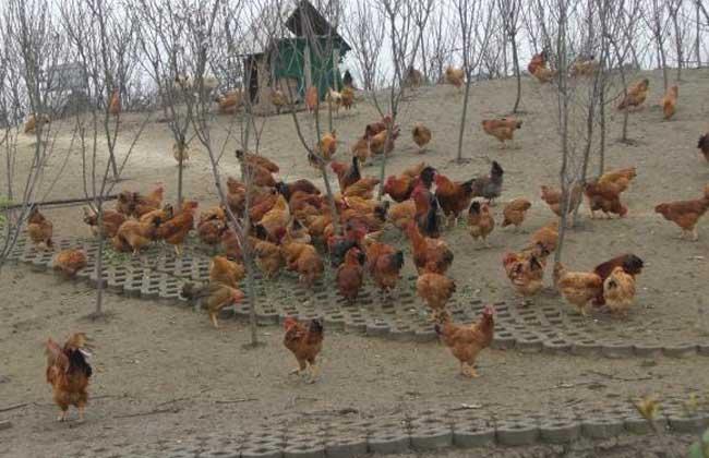 养鸡场管理制度