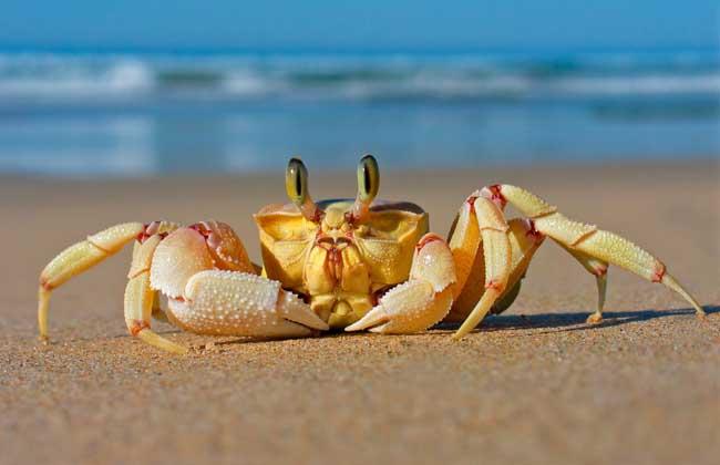螃蟹烂肢病防治方法