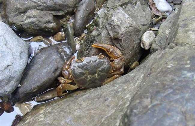 河蟹不蜕壳症的原因分析及预防技术