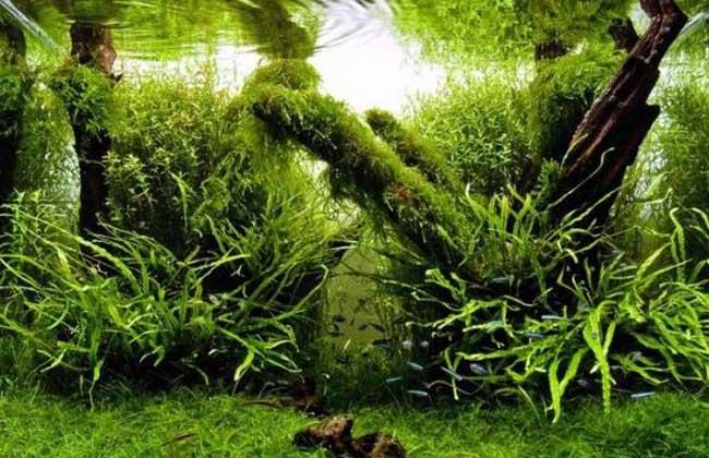 水草养殖技术