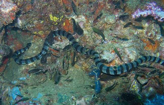 你知道世界上最大的蛇是什么吗 第2页 图片资讯 黔农网
