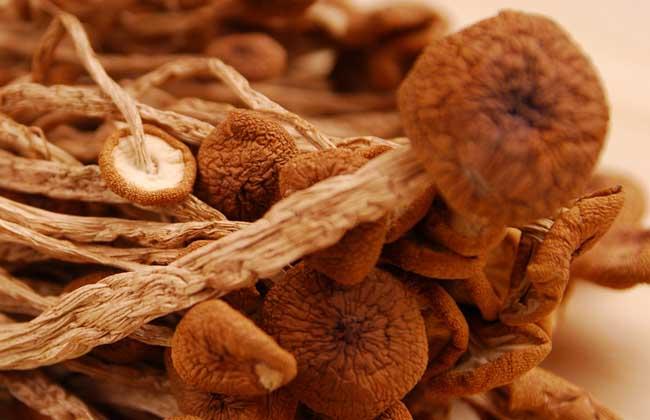 茶树菇的生长条件有哪些?