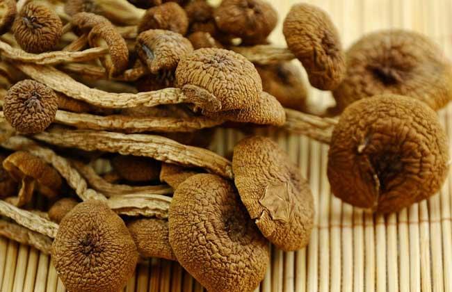 茶树菇不能和什么一起吃