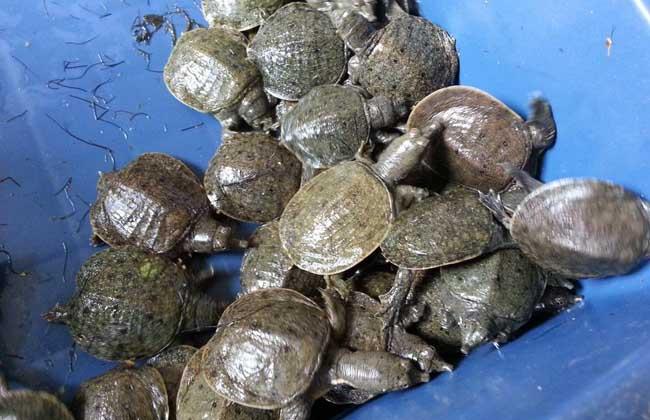 河蚌清理步骤视频教程