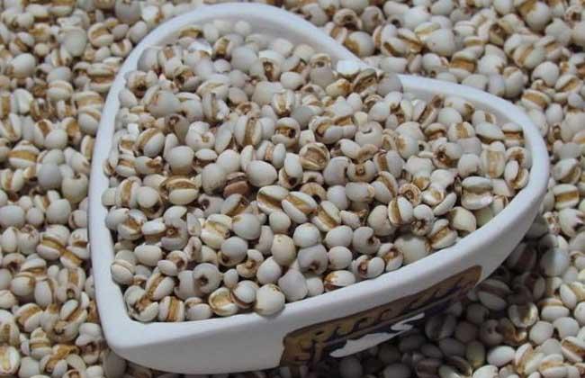 薏米的营养价值