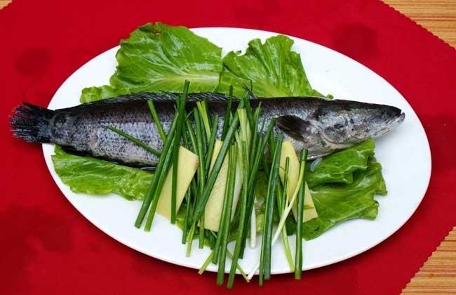 黑鱼的营养价值