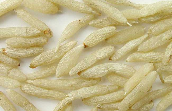 沙参麦冬汤的功效和做法