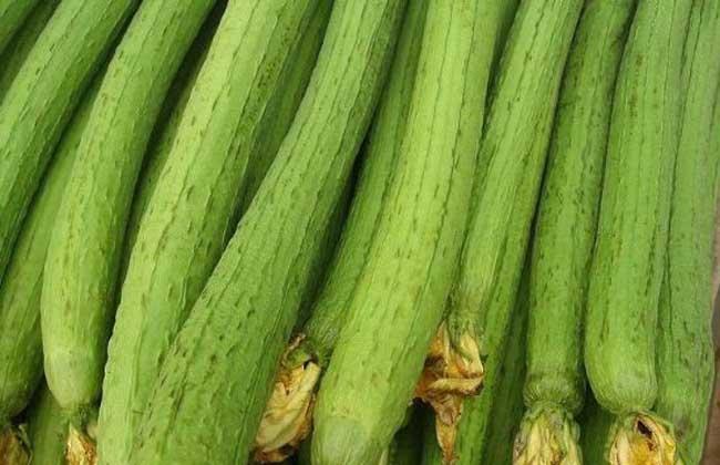丝瓜的营养价值