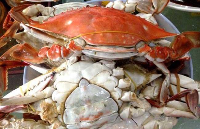 孕妇可以吃梭子蟹吗