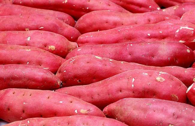 红薯的做法大全