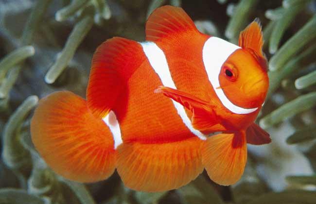什么鱼最好养?