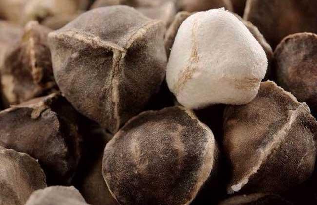 辣木籽有什么副作用