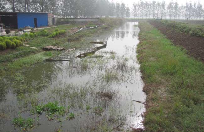 龙虾养殖场地建设