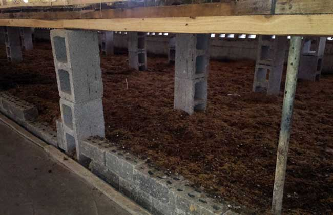 发酵床养鸭技术