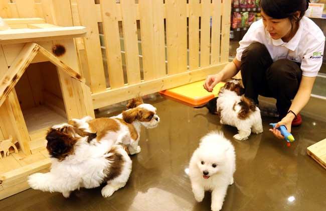 宠物幼儿园