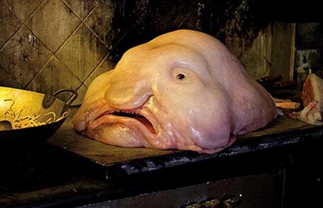 水滴鱼可以吃吗