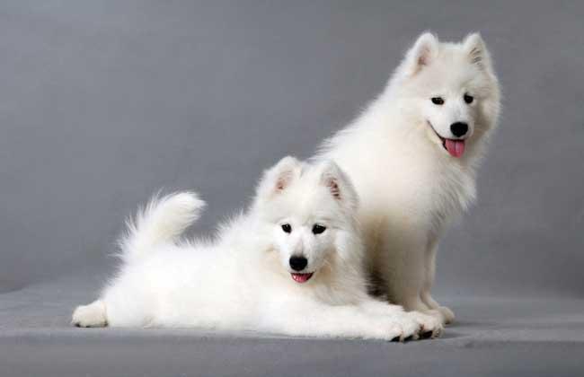 养宠物狗能赚钱吗?