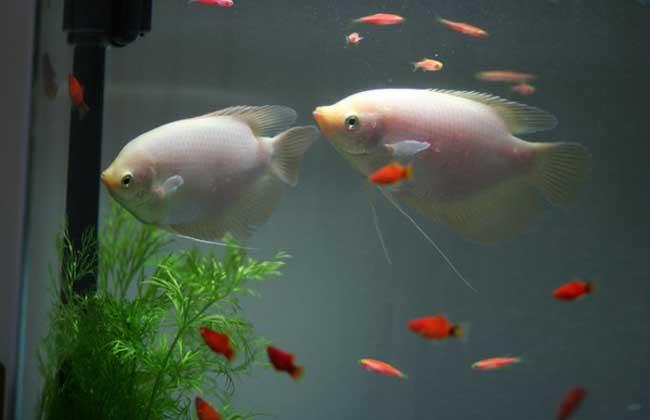 养鱼有什么讲究?