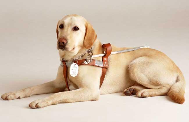 犬巴贝斯虫病怎么治疗