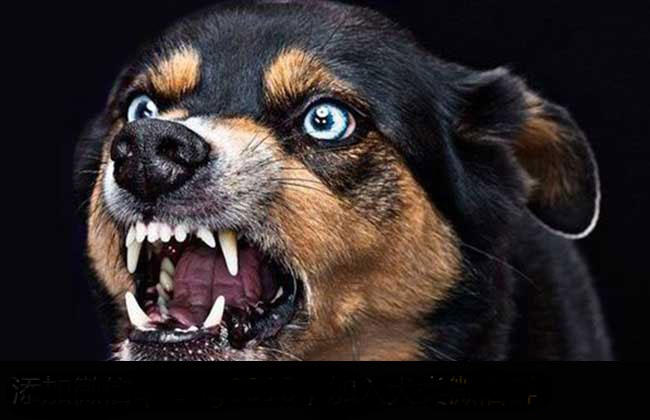 狗得狂犬病的症状有哪些?