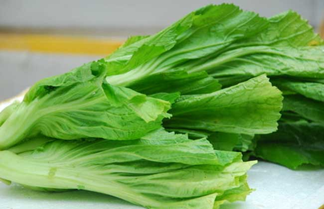 芥菜的种植价值