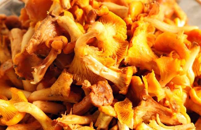 鸡油菌价格多少钱一斤
