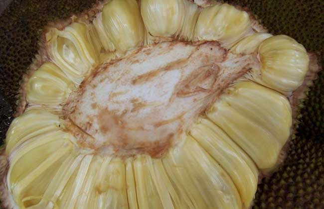 菠萝蜜过敏怎么办