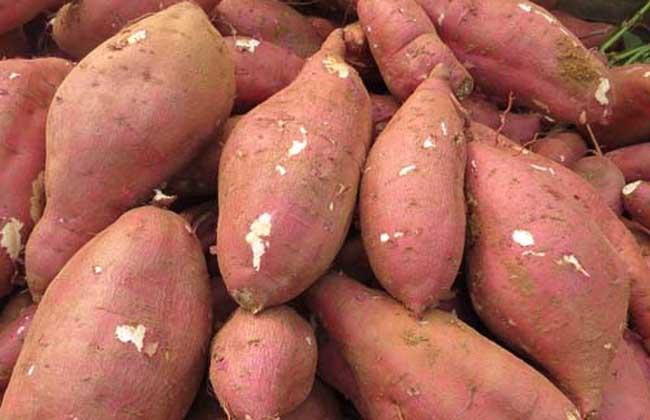 孕妇吃红薯对胎儿好吗