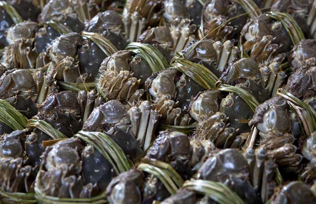 清宫和红薯一起吃?螃蟹可以后手术吃胡椒粉吗图片