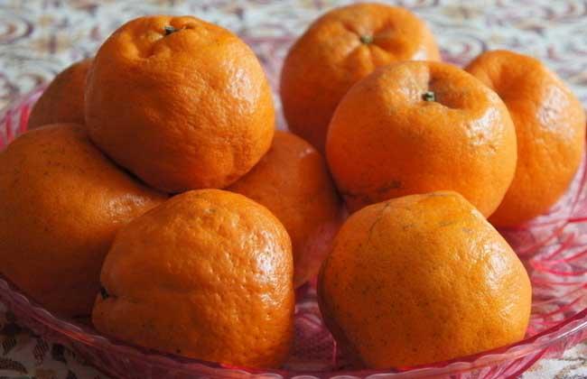 橘子不能和什么一起吃