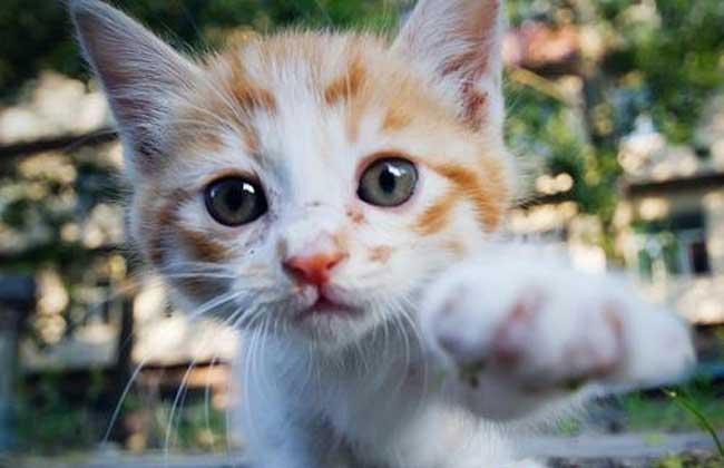 猫身上有跳蚤怎么办?