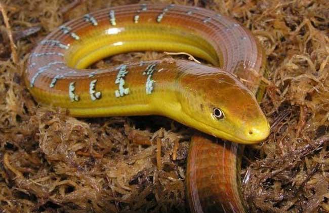 蛇蜥和蛇有什么区别?