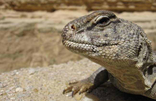 蜥蜴是两栖动物吗?