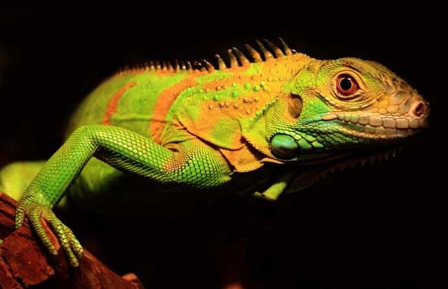 蜥蜴是如何保护自己的?