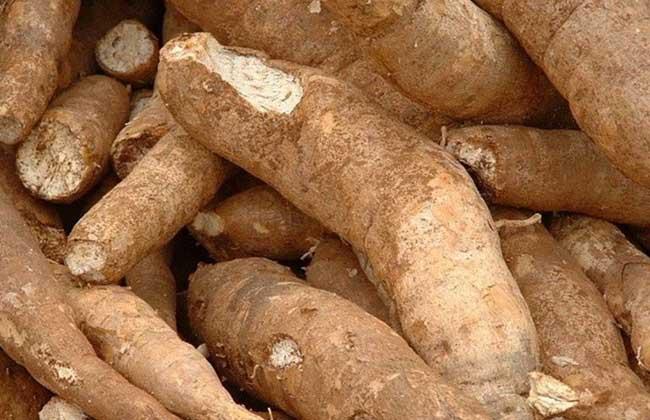 木薯的功效与作用