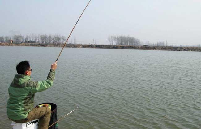 钓黑坑鲤鱼饵料配方