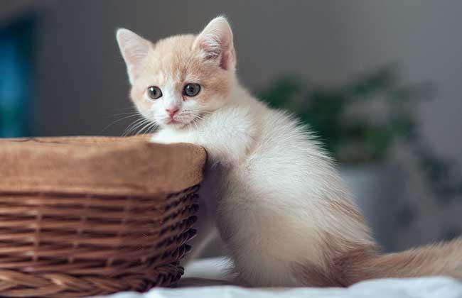 猫为什么喜欢吃鱼?