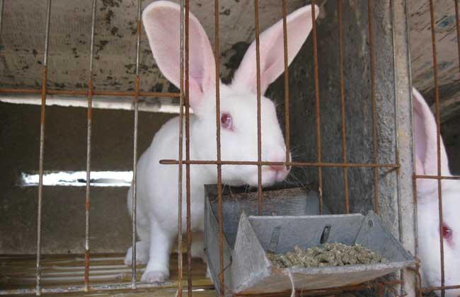 兔子怎么养