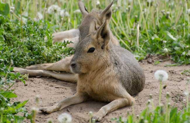 野兔养殖投资多少钱